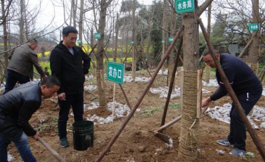 荥经县水务局积极参与义务植树活动
