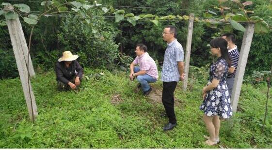 省绿色食品发展中心检查指导雅安农业绿色发展工作
