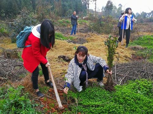 市发展改革委组织开展植树造林活动