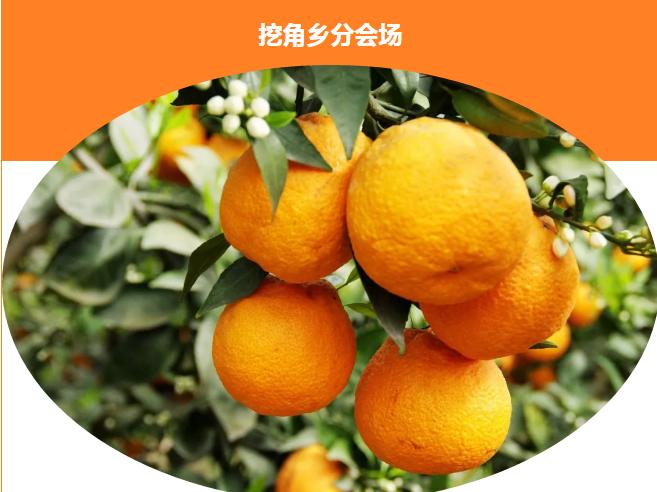 石棉黄果柑节3月17日开启