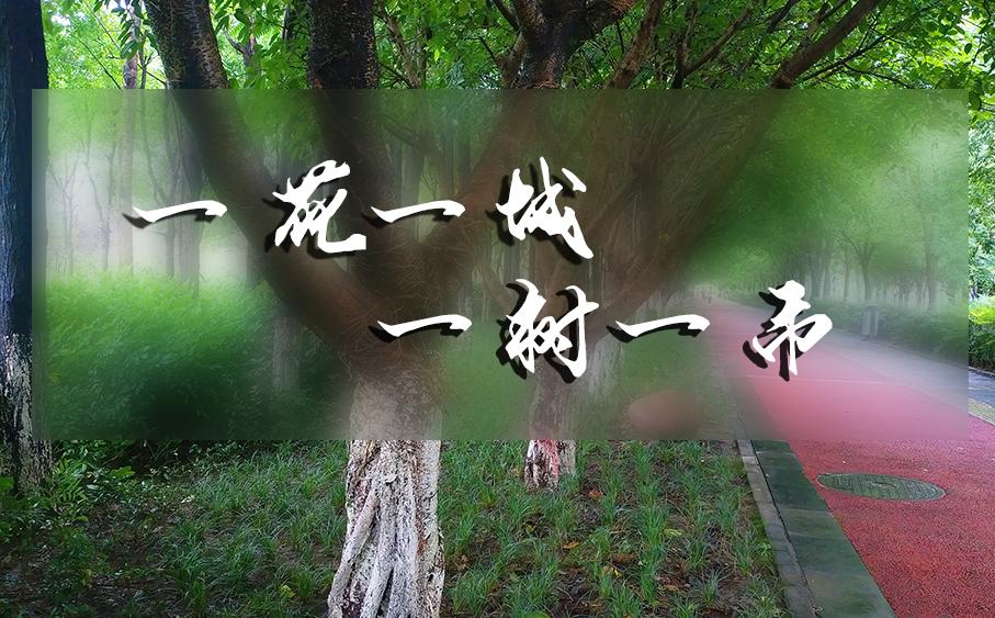 雅安市树市花手绘活动开始啦,活动丰富奖品多!