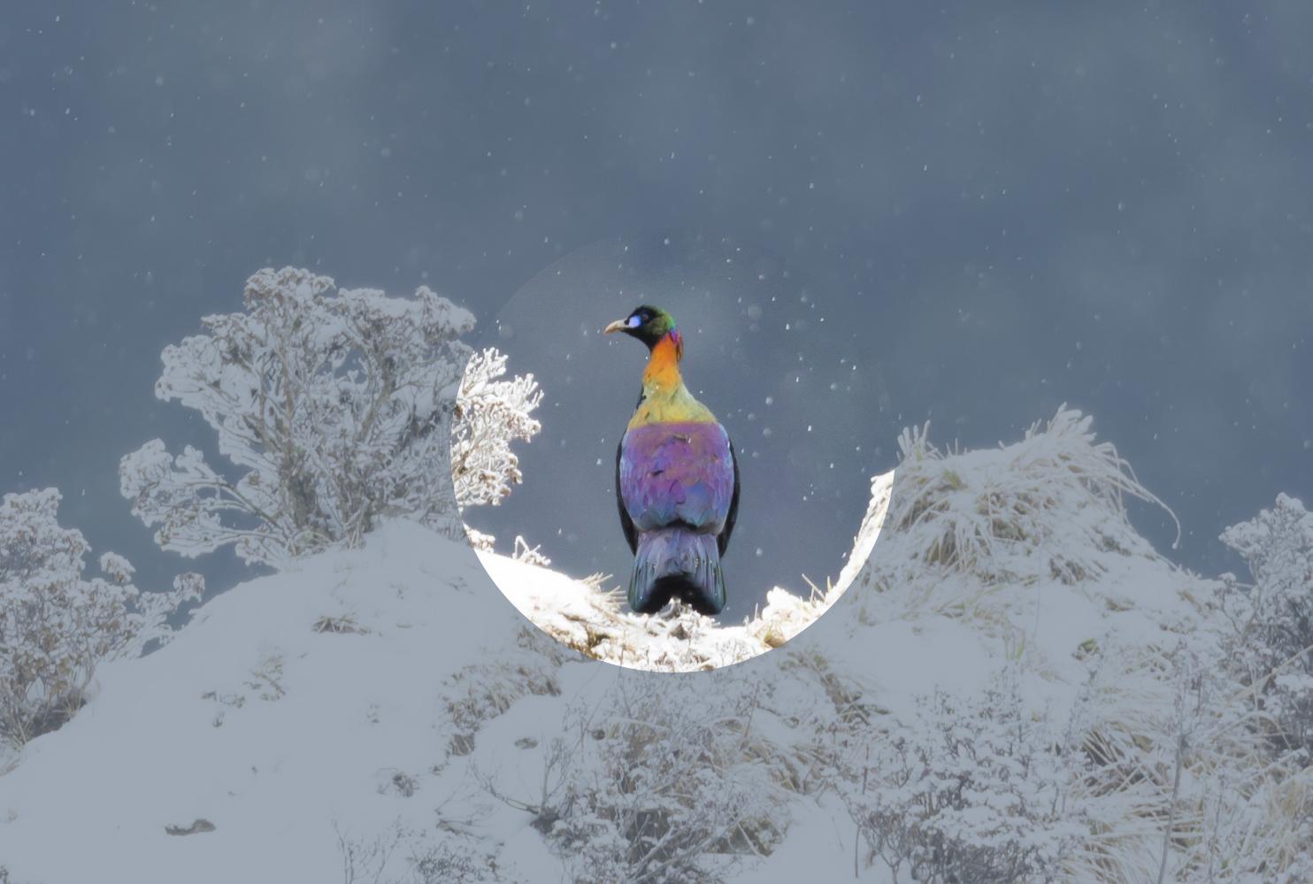雅安已确认鸟类500多种,你认识几种?(认到了有奖品拿)