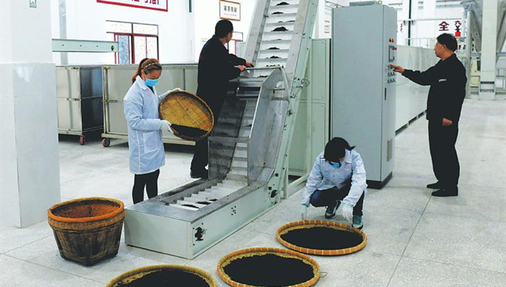 我国首条全自动清洁化藏茶生产线在雅启用