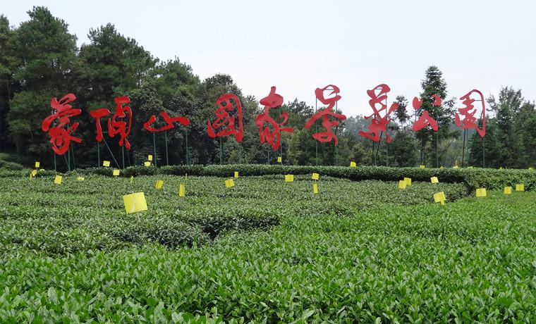 雅茶出征上海  再战东方市场