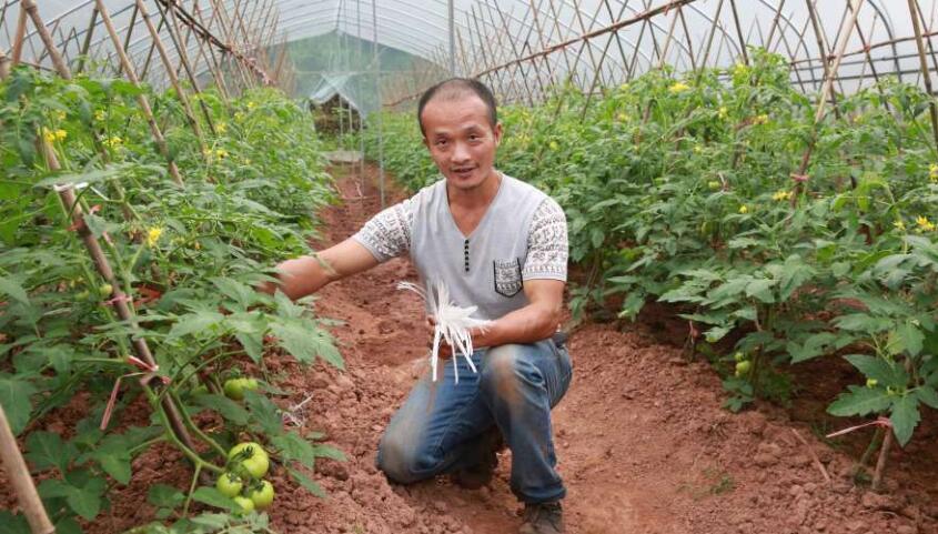 发展生态种植  助农脱贫增收