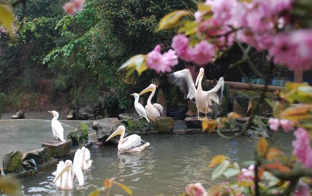 百鸟齐聚碧峰峡  赏景观鸟等你来