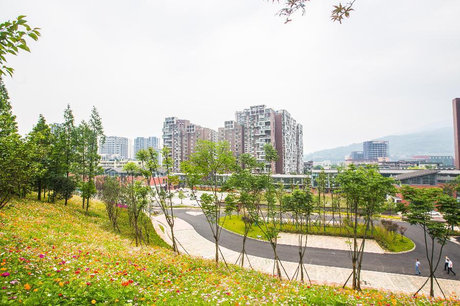 鲜花绽放  金凤山公园焕发生机