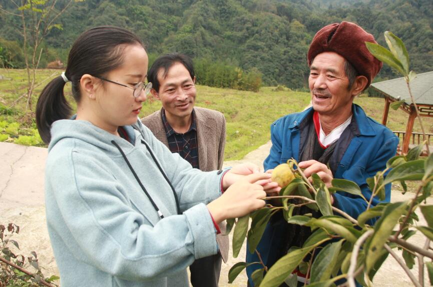 组建专家服务团帮扶贫困村产业发展