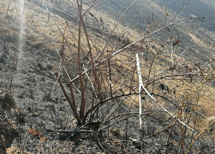 上山祭祀引发山火  被处罚金5000元