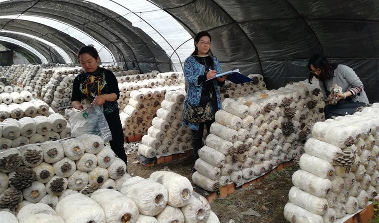 党建引领  团结协作  严把农产品质量安全关